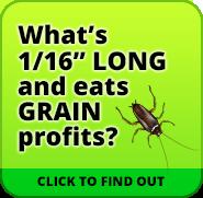 Rusty Grain Beetle infestation