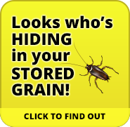 Insect infestations in stored grain