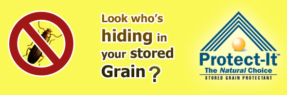 stored grain insects